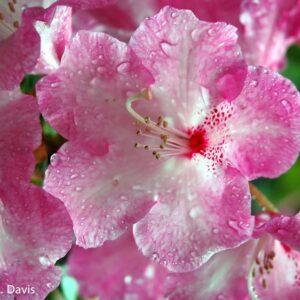 Floral After a Rain