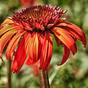 La Fleur Firet