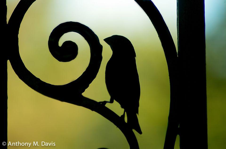 Bird on the ornamental iron