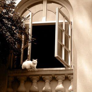 Winterthur cat in the window